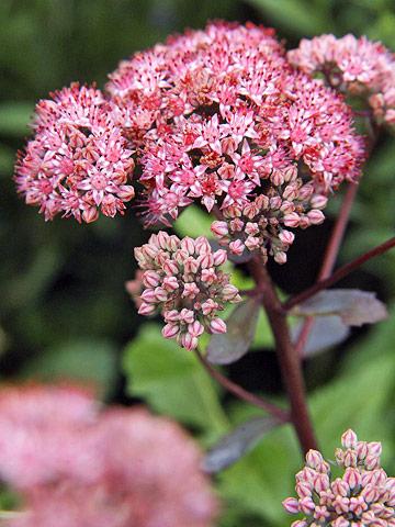 Grow drought-tolerant plants