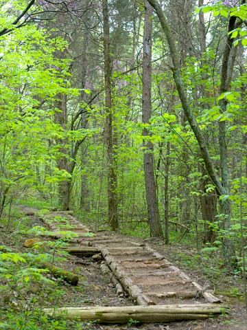 Edge of Appalachia Preserve