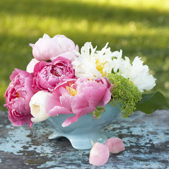 Showing off your peonies