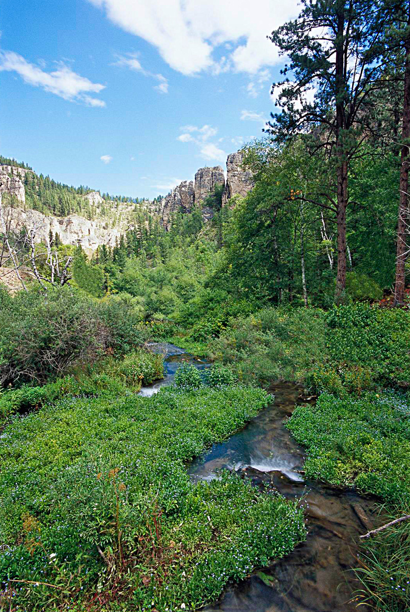Black Hill's Spearfish Canyon