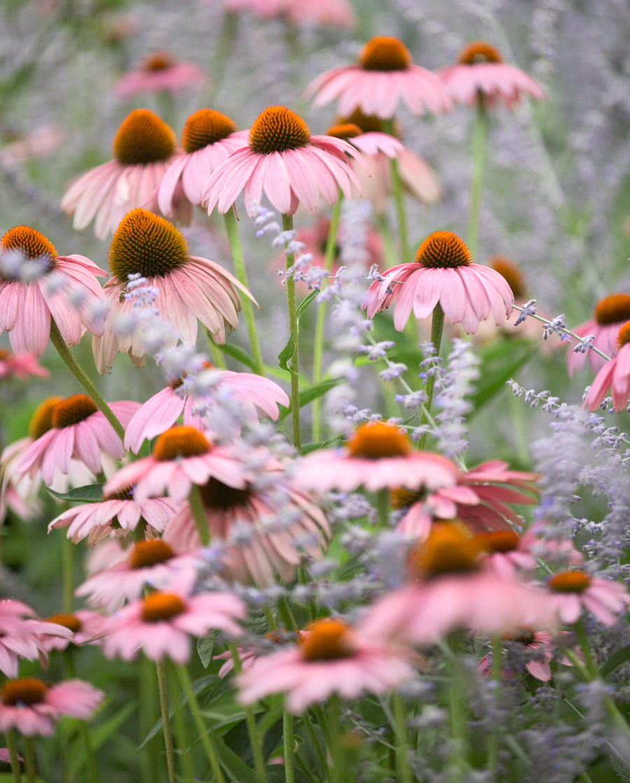 #2: Plant natives