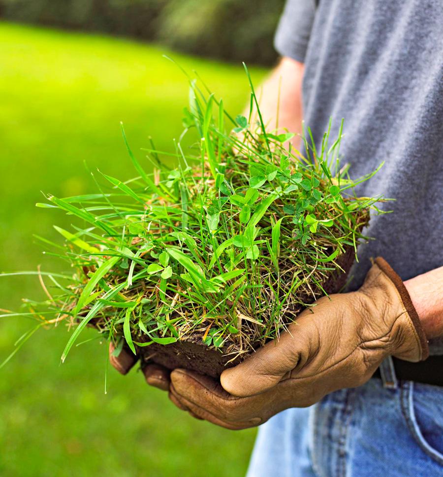 #7: Tolerate weeds