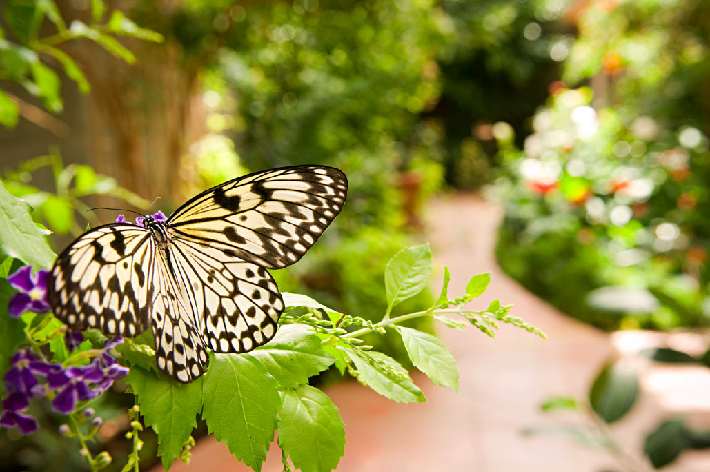 Sertoma Butterfly House and Marine Cove.