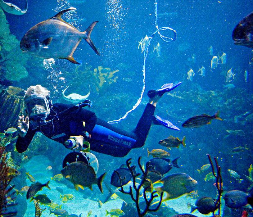 Shedd Aquarium.