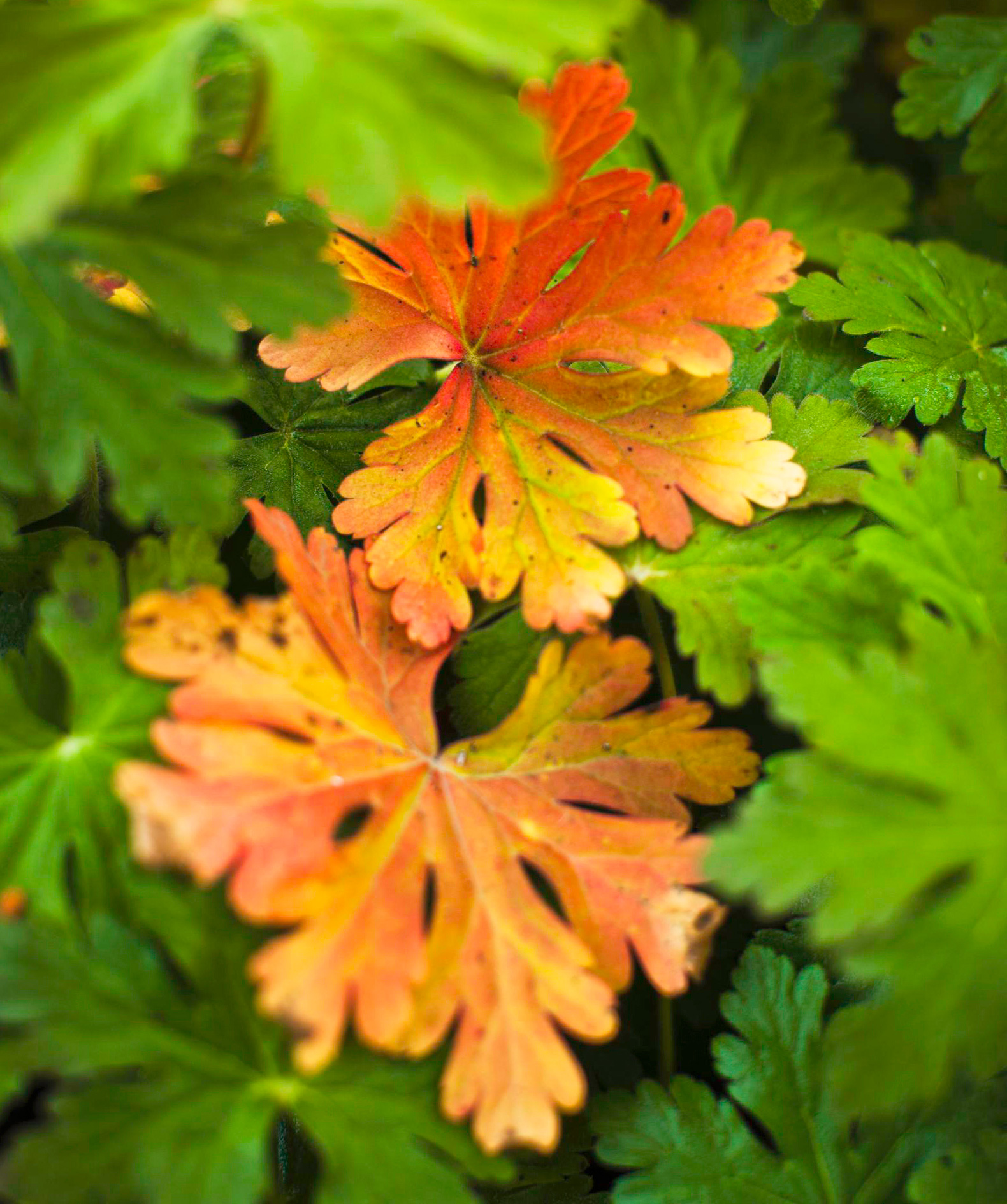Fall garden ideas: Perennials