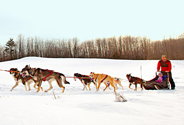 Dog sledding adventures give riders a chance to see wooded trails from a new perspective (and play with the dogs).