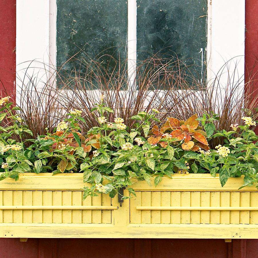Old window shutter box