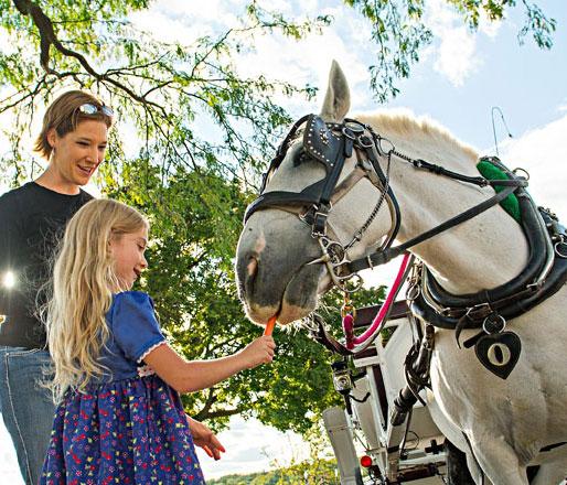 Horse-drawn carriage rides weave through Lake Geneva.
