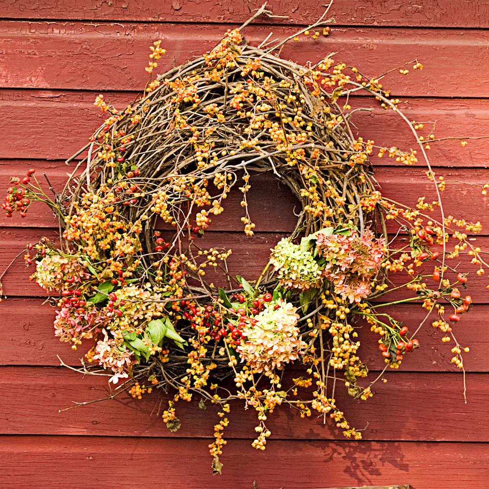 Bittersweet and hydrangea wreath