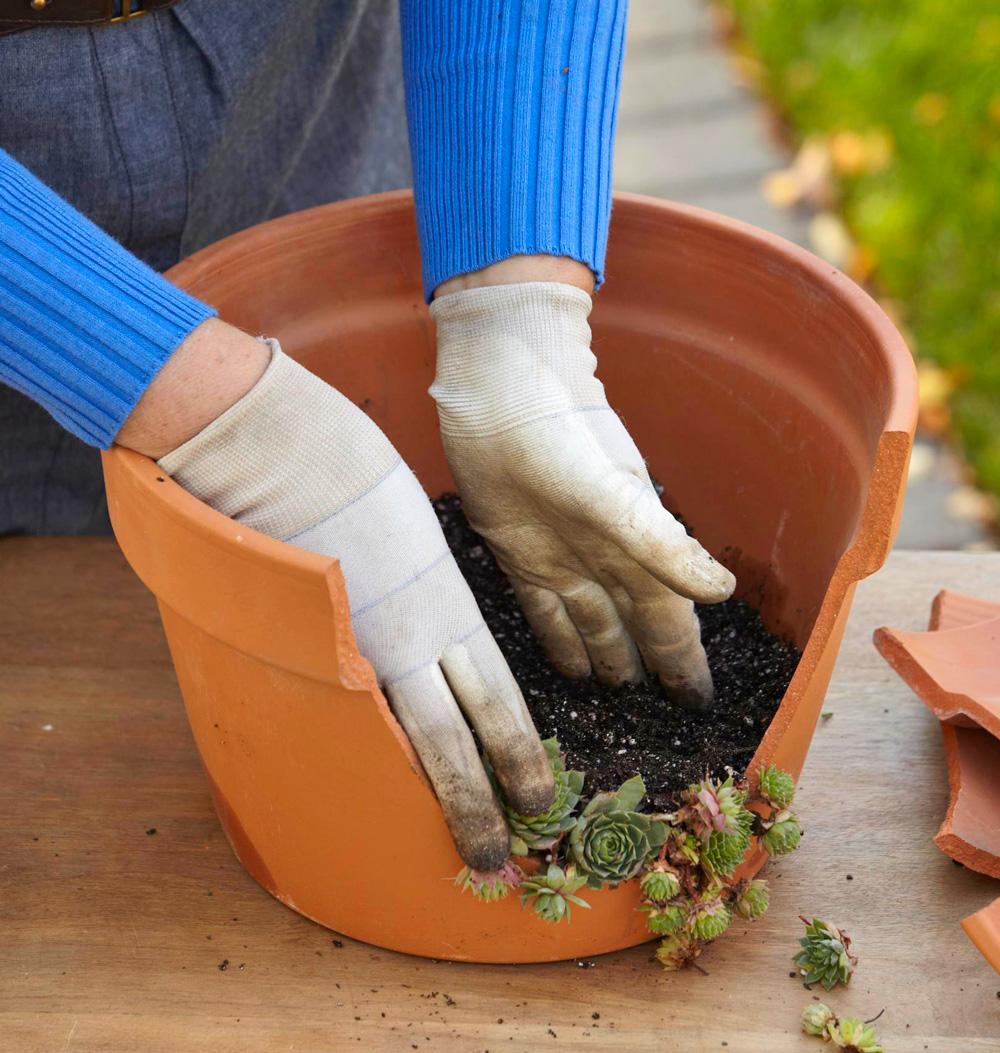Step 3: Arrange plants