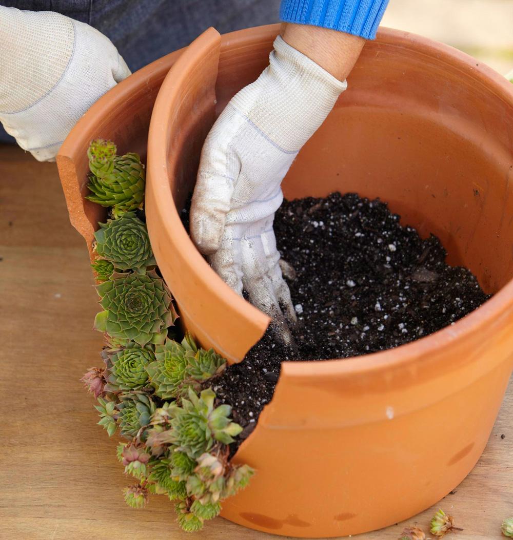 Step 4: Add pot fragment