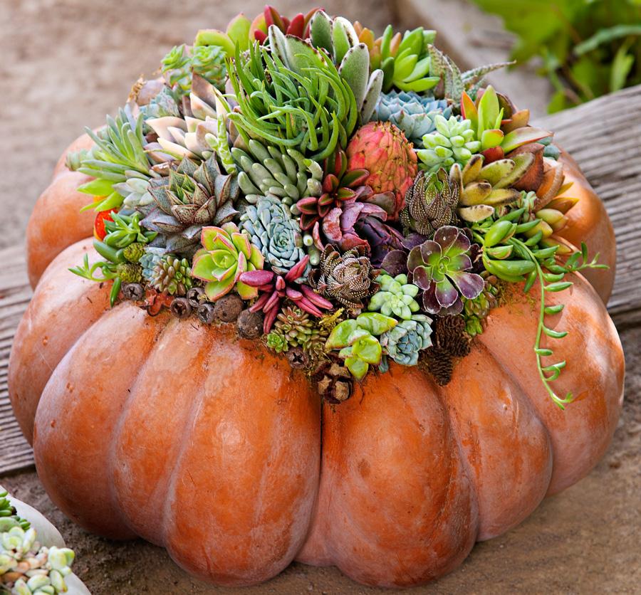 Create your own succulent pumpkin