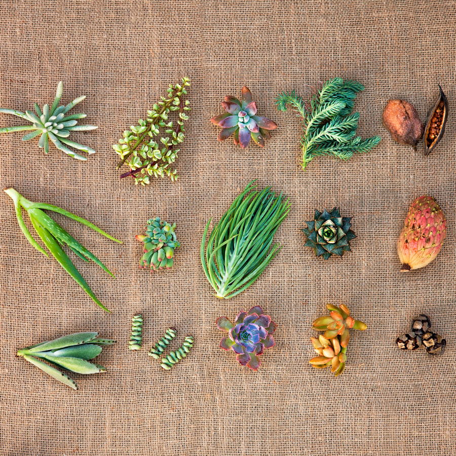Succulent cuttings and seedpods