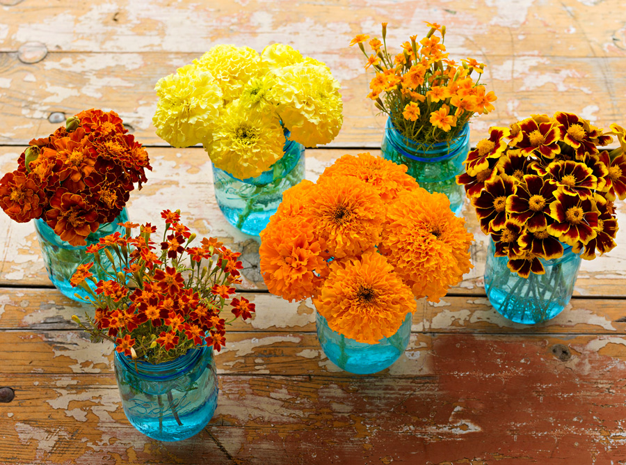 new year flowers- Marigolds and Fruit Blossoms