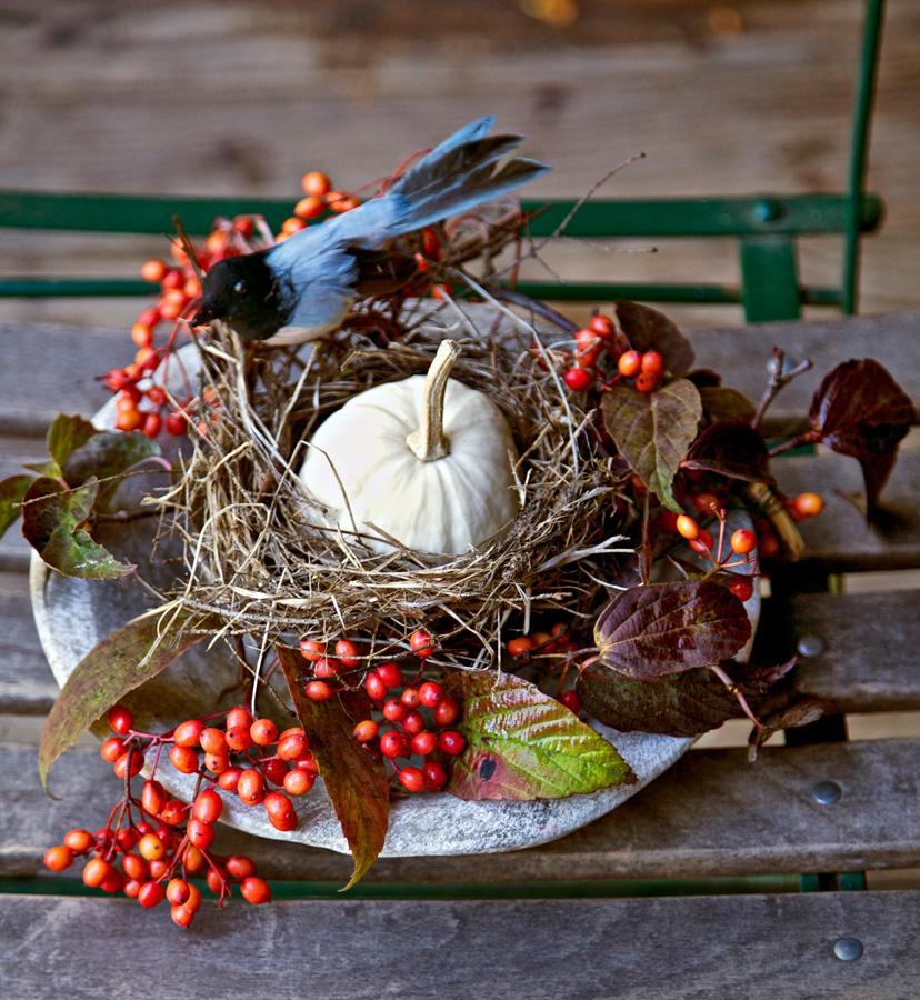 Bird's nest in a bowl