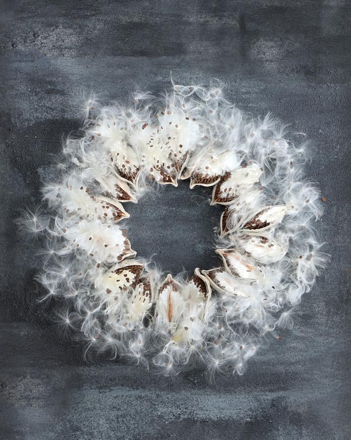 Milkweed wreath
