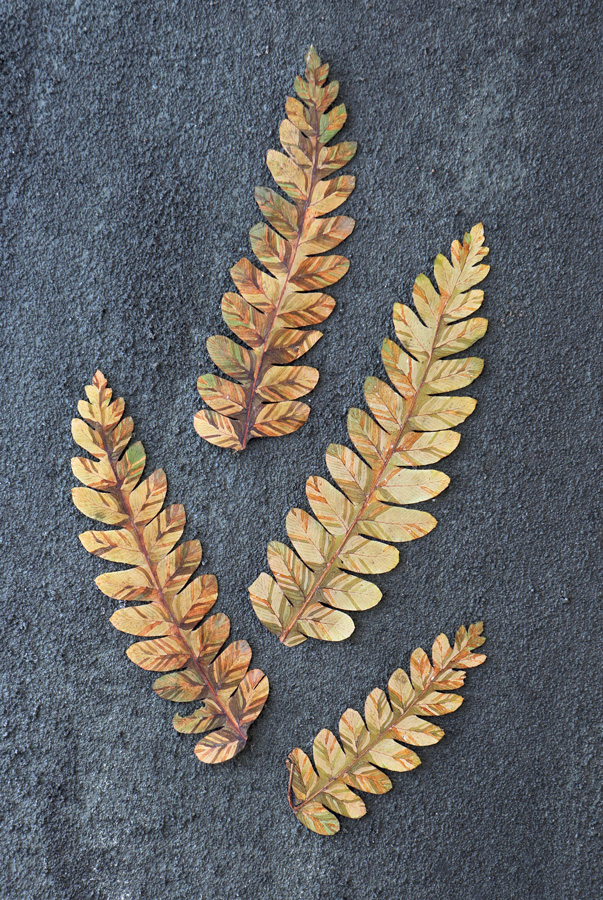 Stained-glass ferns