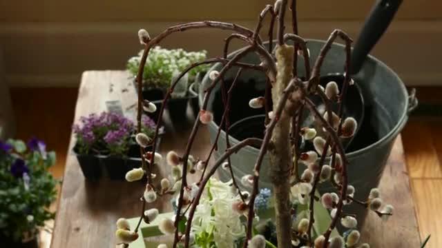 How To: Create a Tabletop Garden