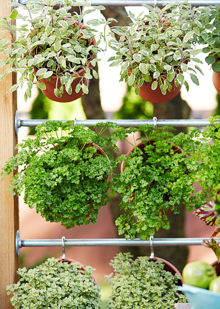 Herb wall closeup