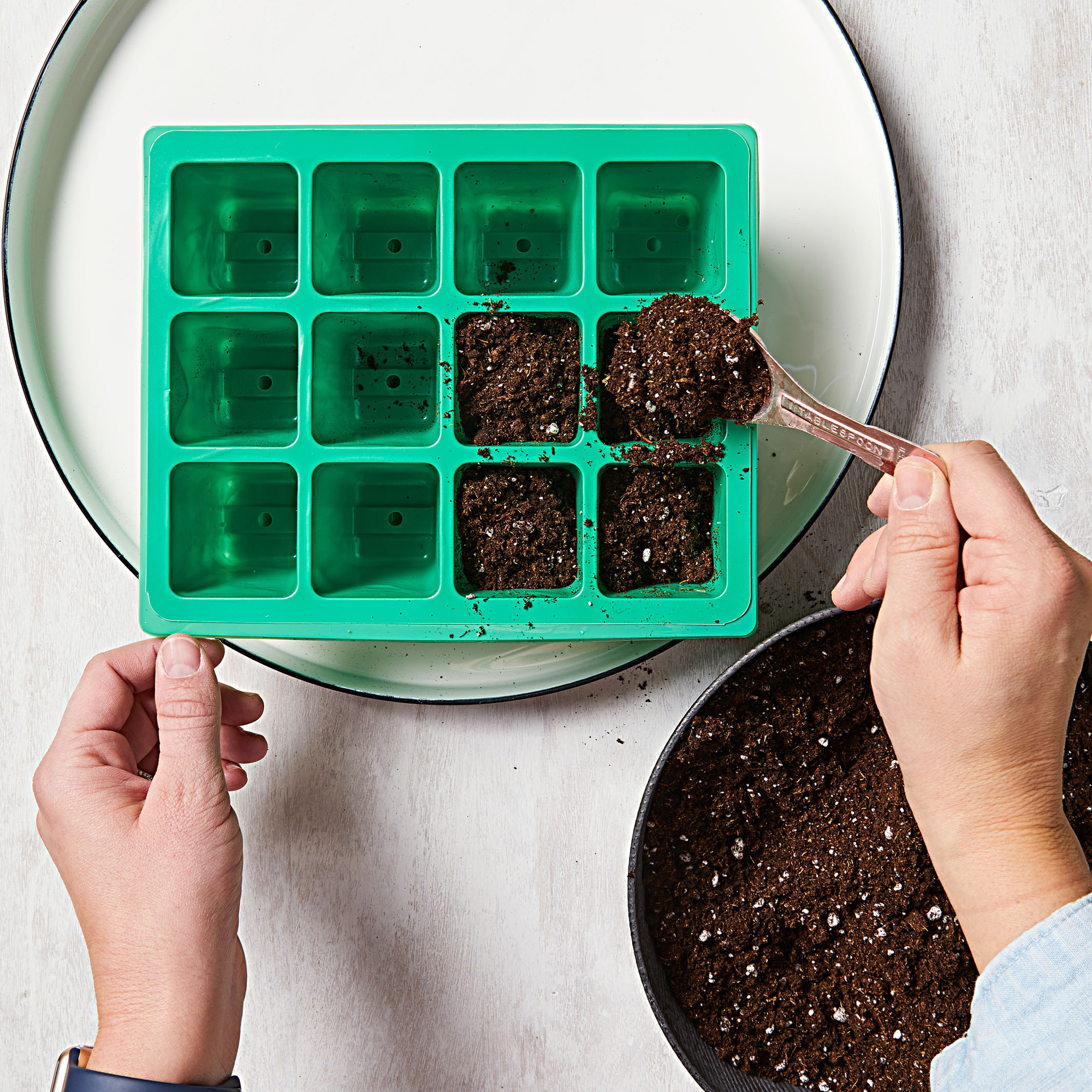 How to start seeds—Step 1