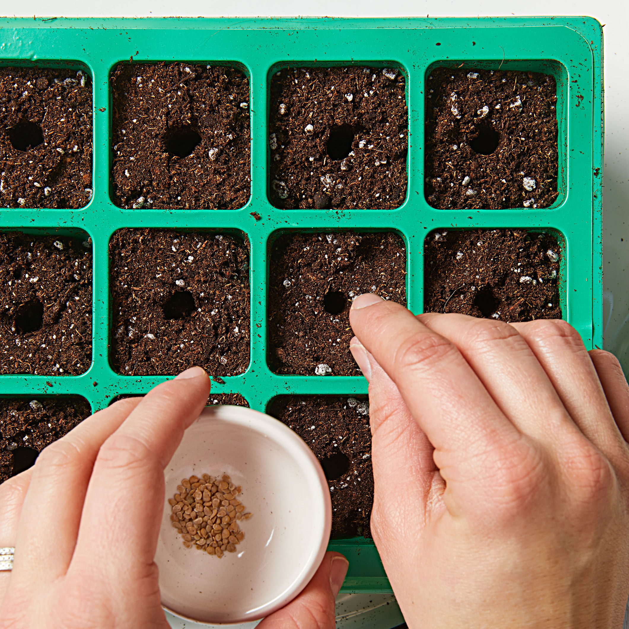 How to start seeds-Step 3