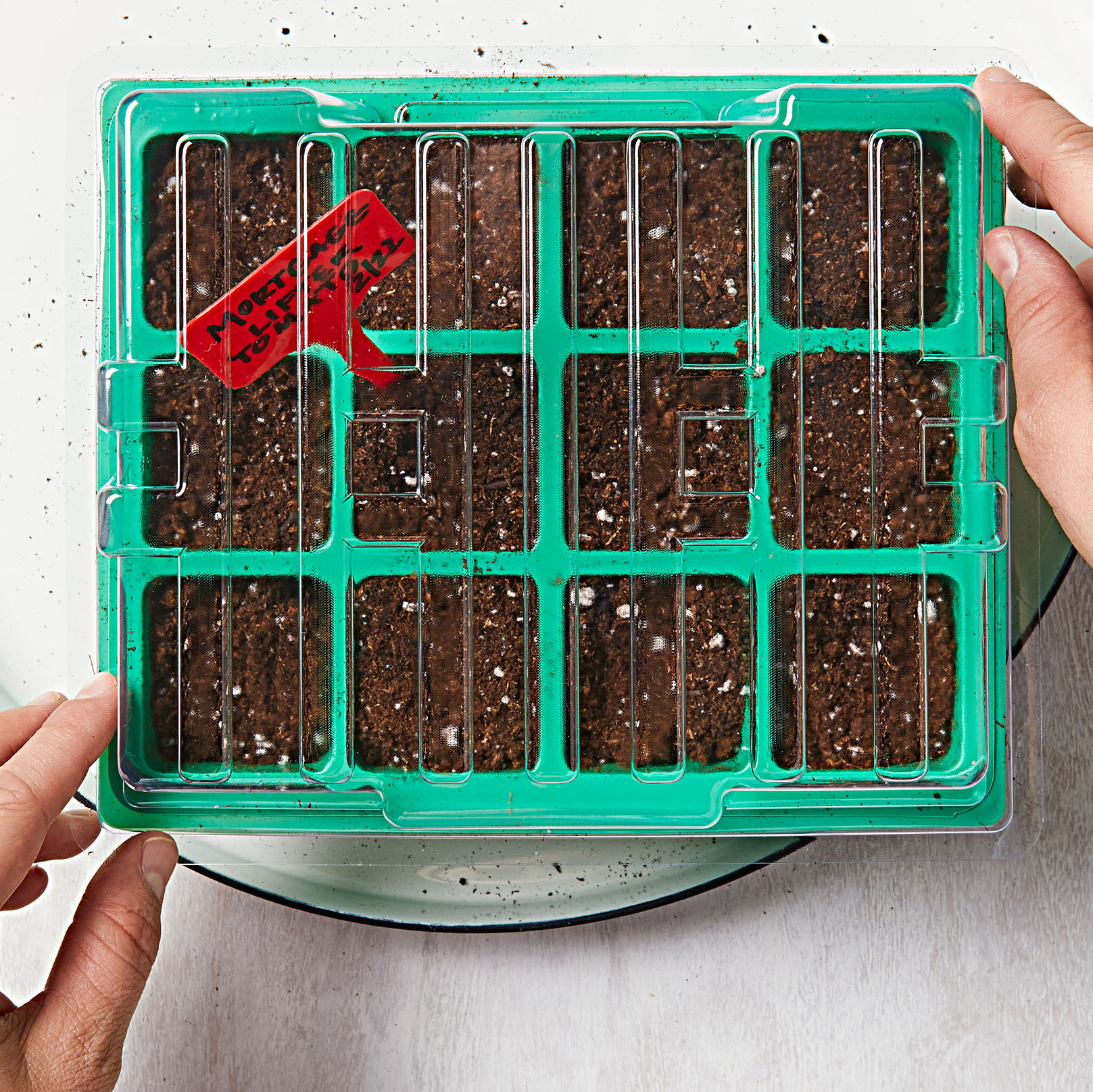 How to start seeds-Step 6