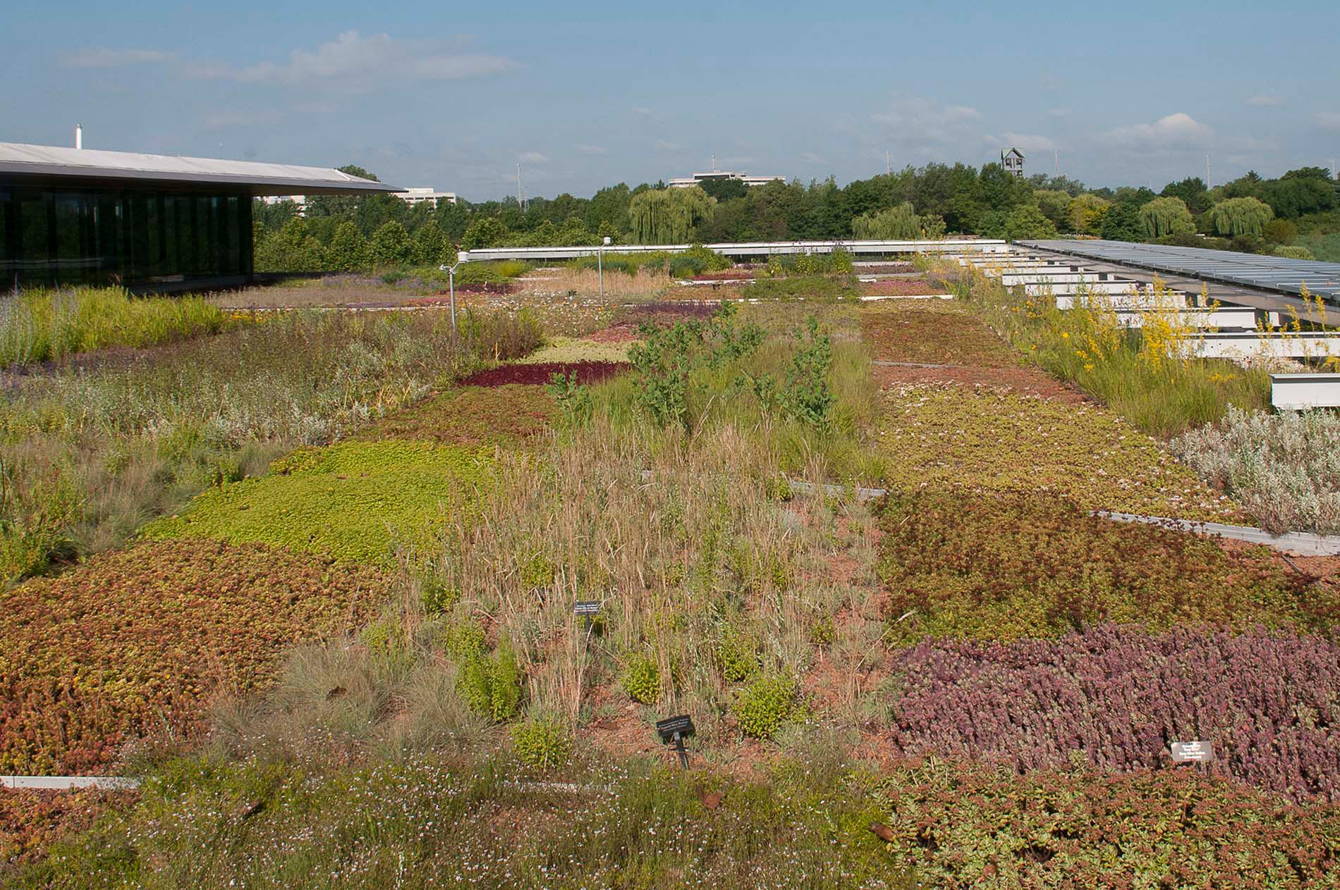 Chicago Botanic Garden green roof-North