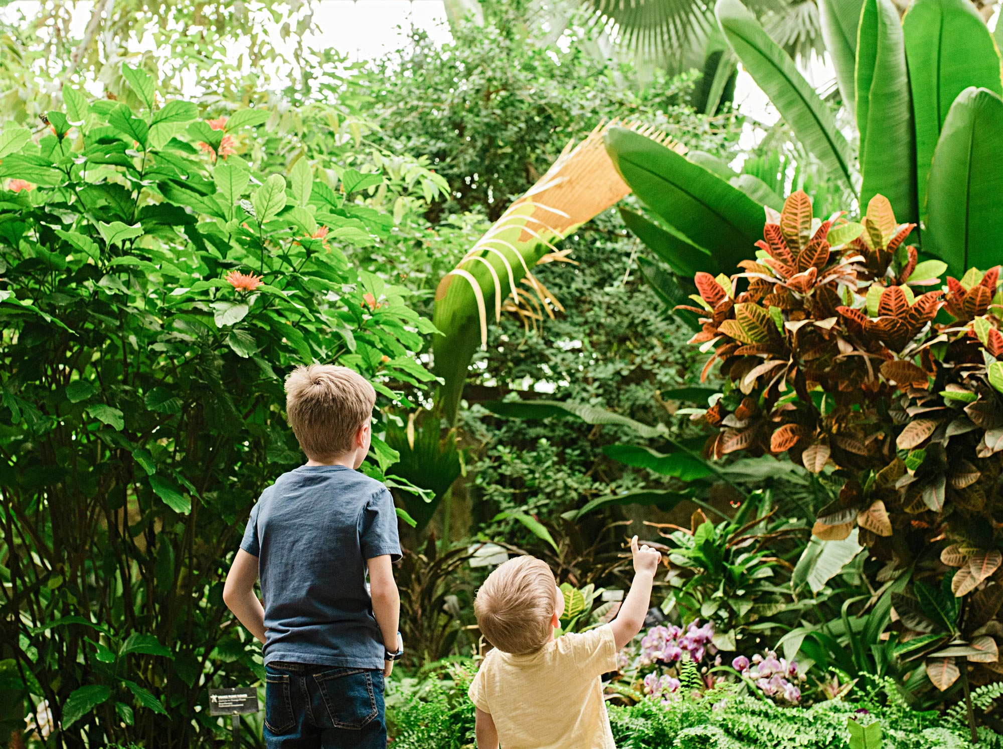 Meijer Gardens and Sculpture Park butterfly exhibit