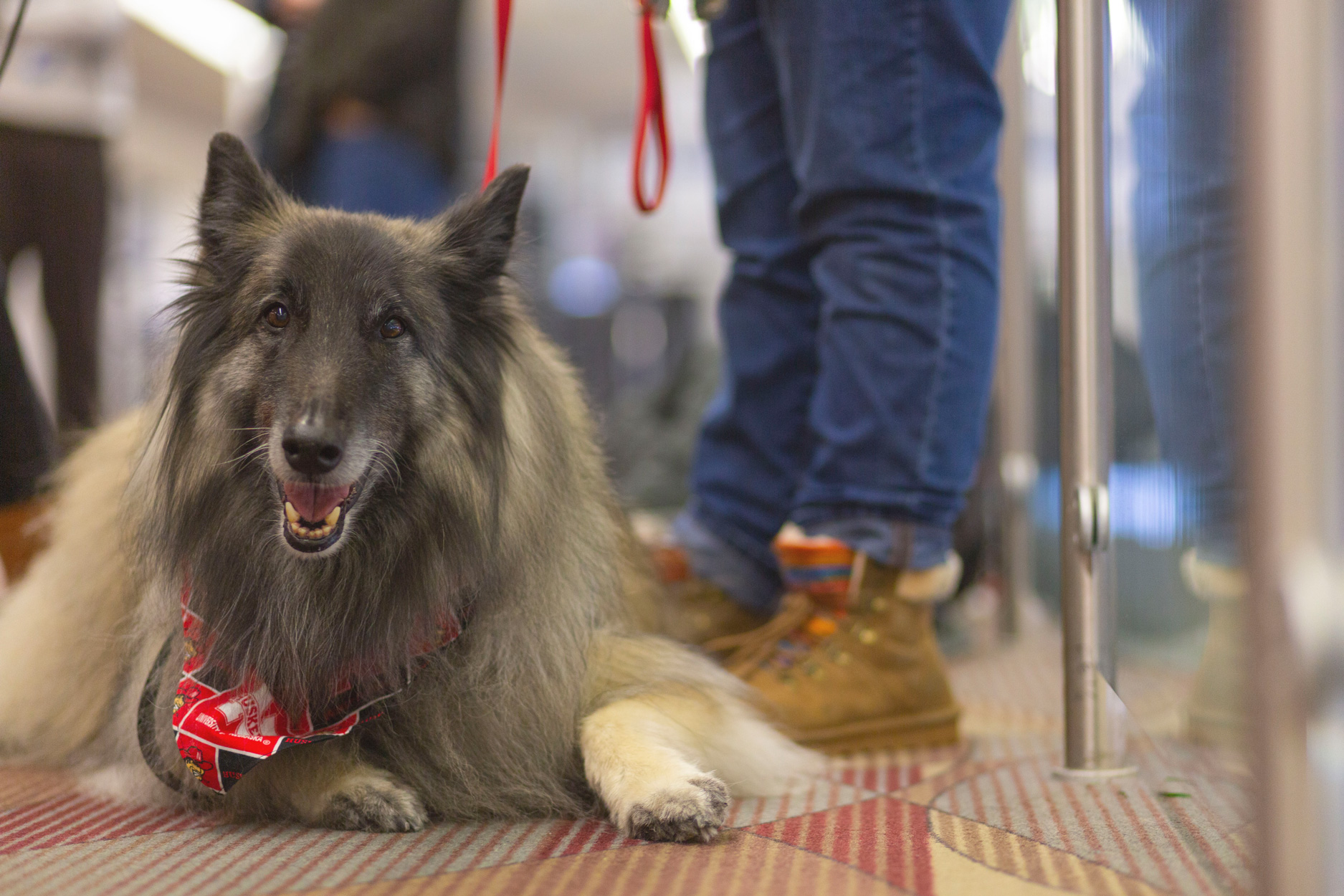 Healing Heart Therapy Dogs
