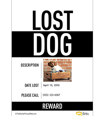 Step 4: Post  Lost Pet  Flyers