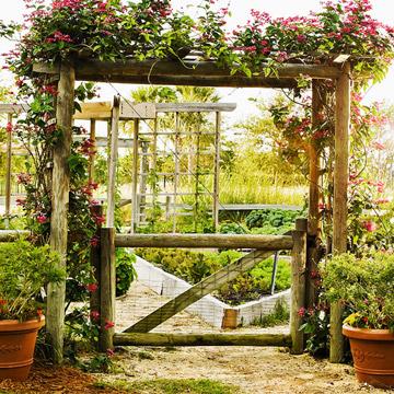 Slide7_MG-2119-Primo-Organic-Garden.jpg