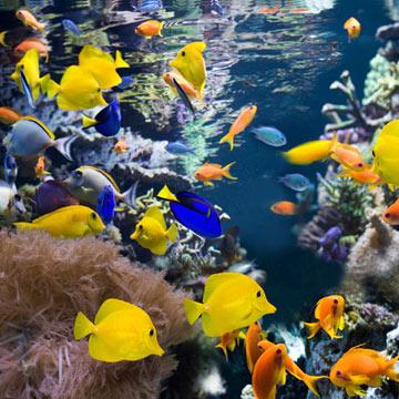 fish_iStock_000017460110Small.jpg