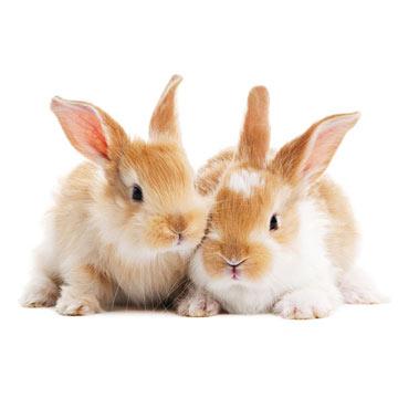 rabbits_istock.jpg