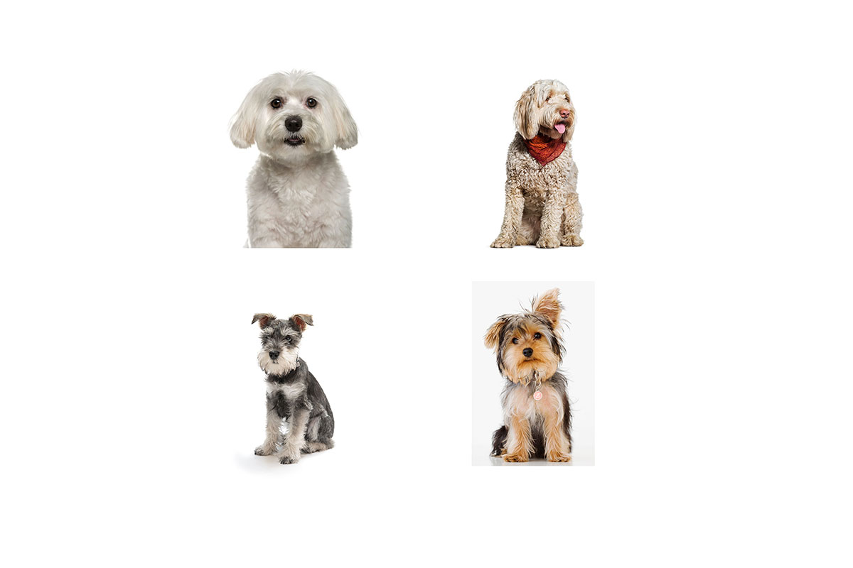 hypoallergenic dog composite