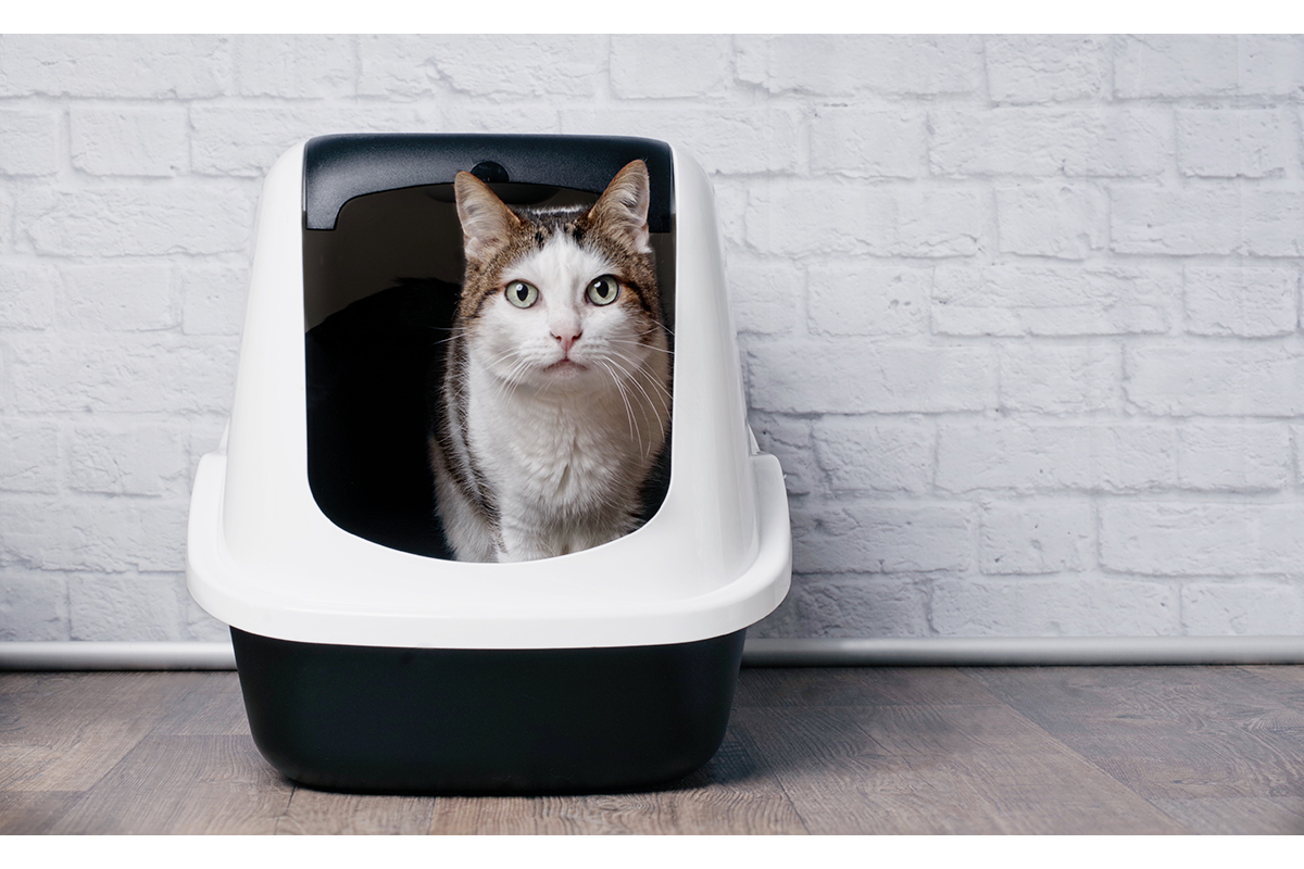 cat in kitty litter container