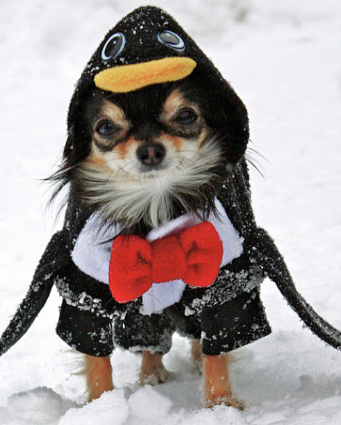 Best-Dressed Pets Contest Winners