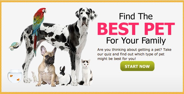 Pet Quiz.jpg