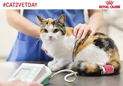 TakeYourCattotheVetDay.jpg.jpeg