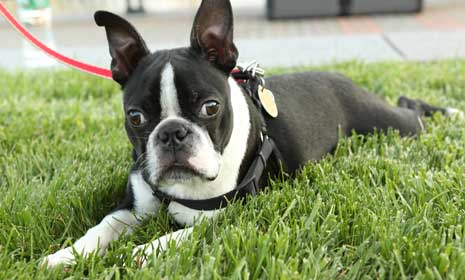 Keep Pets Safe From Summer Heat