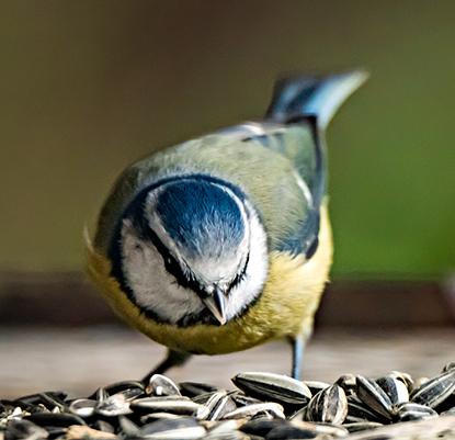 sq bird.jpg