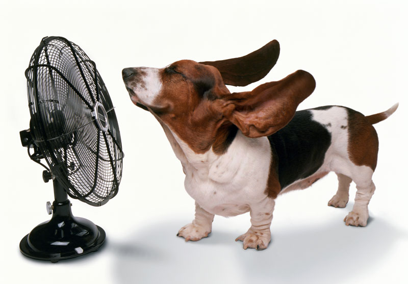5 Ways to Protect Your Pets from Summer Heat