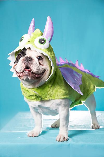 Best Dressed Pets