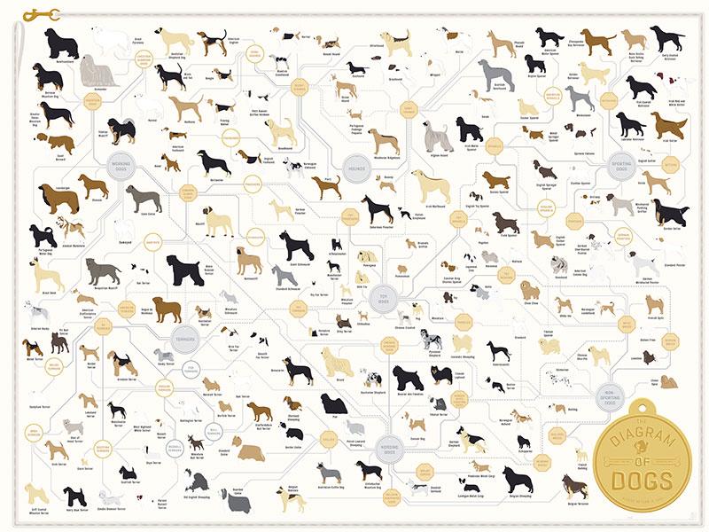 diagram-of-dogs.jpg