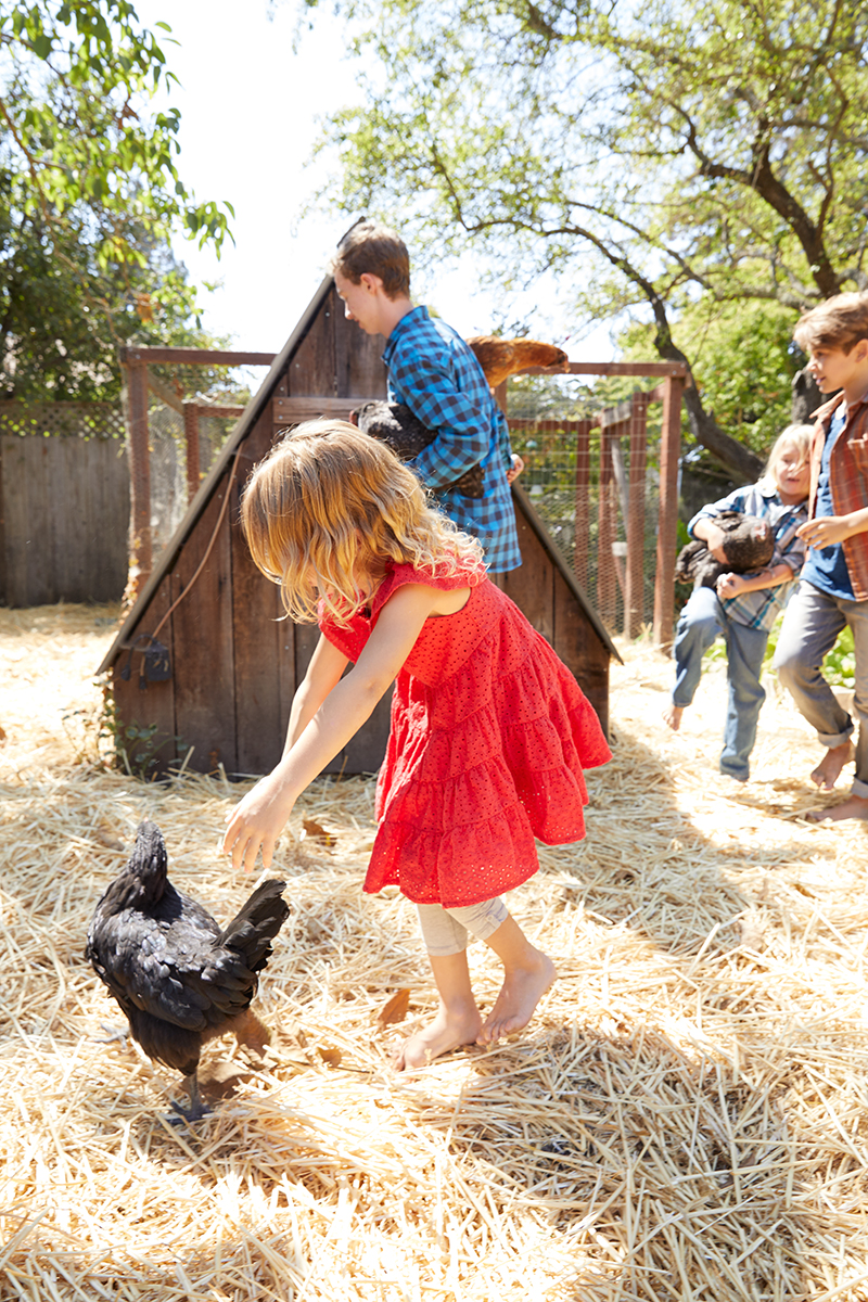 MLife Jan 2018 Foster Family Daughter Chasing Chicken