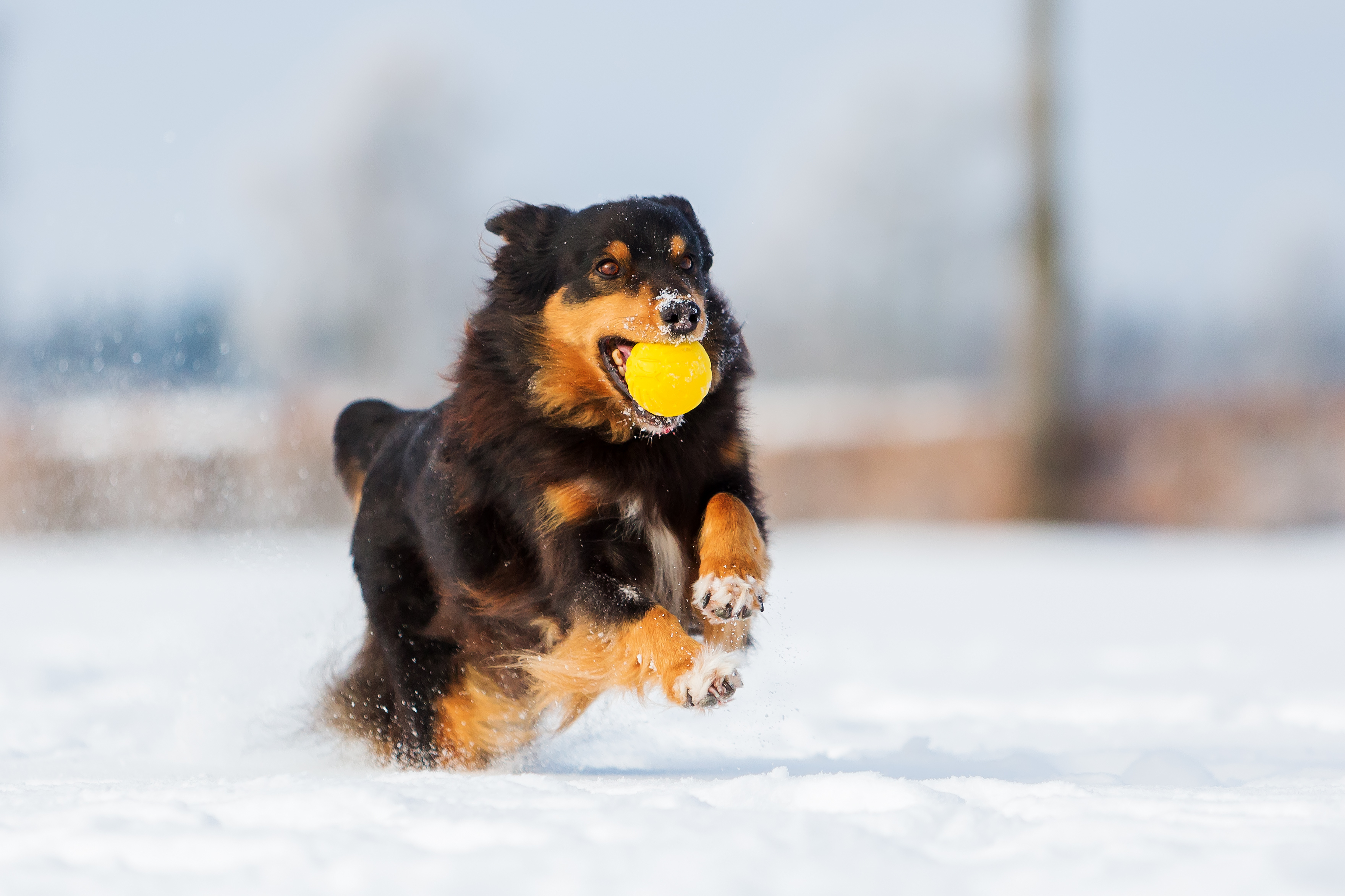 5 Winter Pet Problems and How to Prevent Them