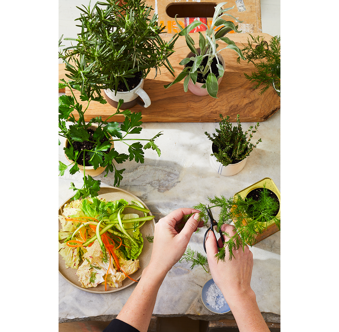 Growing, Storing and Drying Herbs