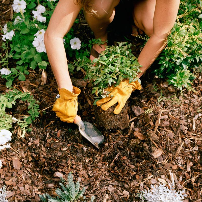 recharge gardening