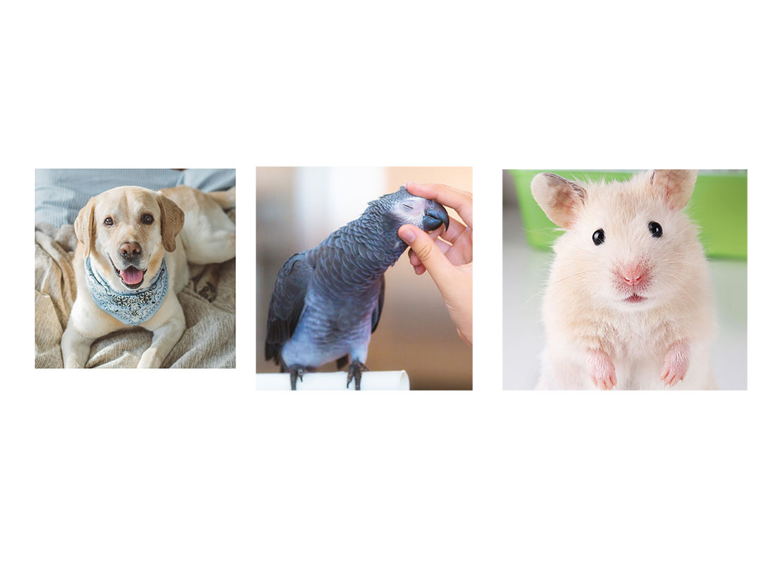 The Lifetime Costs of Owning Dogs, Cats, Hamsters, Birds and More