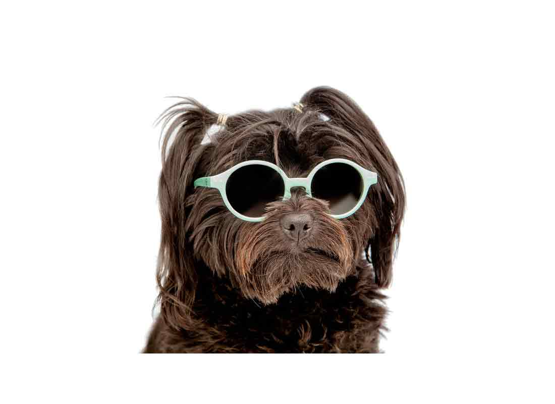 IPIZI dog sunglasses