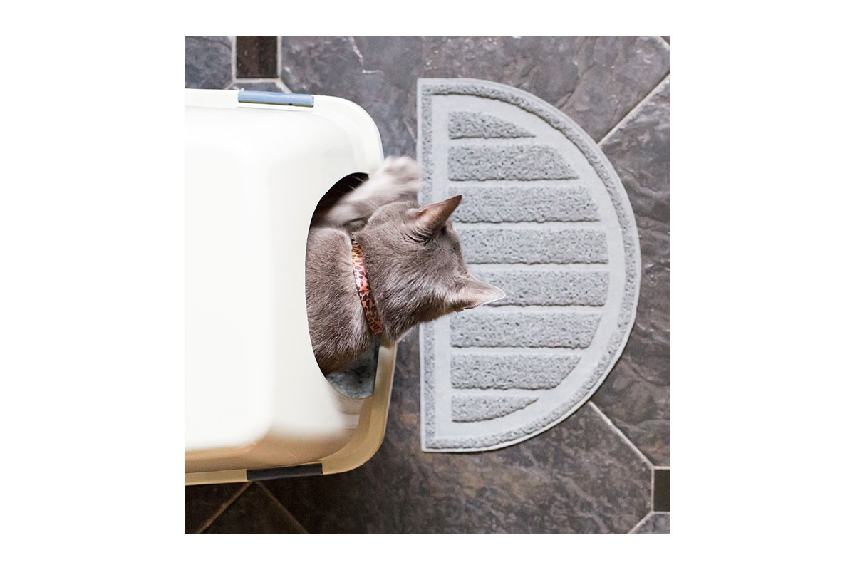 How to Choose the Right Cat Litter and Litter Box
